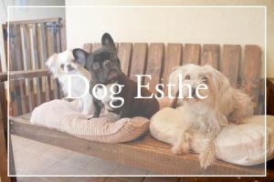 犬のエステサロン