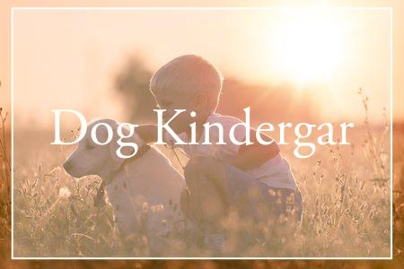 犬の幼稚園(しつけ教室)