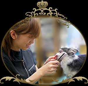 トリマー犬の美容師