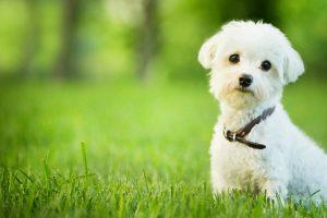 Dog Care Salon Tiara Dogs2