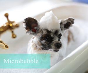 犬マイクロバブル