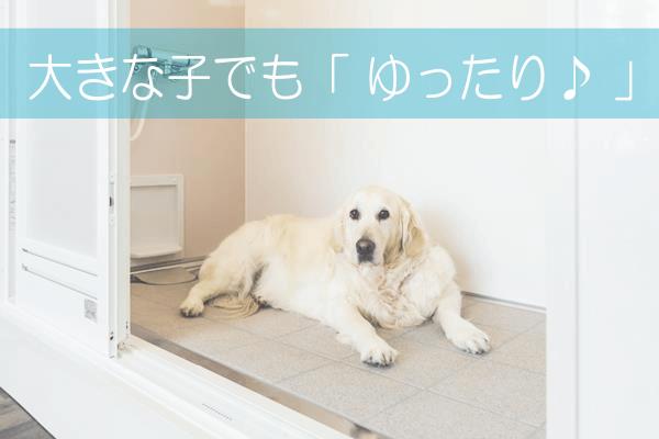 dog-shower