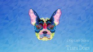 tiara dogs
